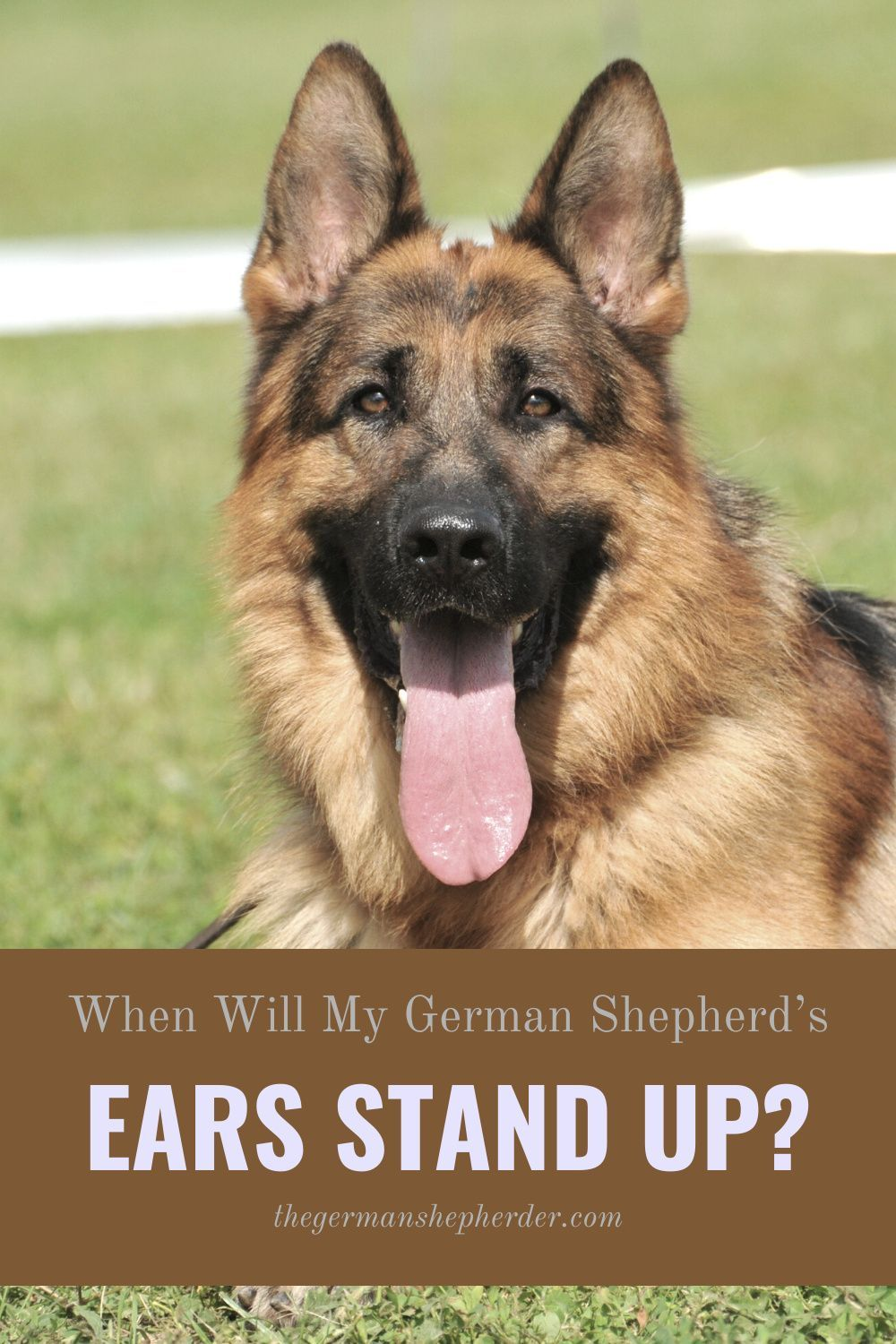How To Get German Shepherd Ears To Stay Up