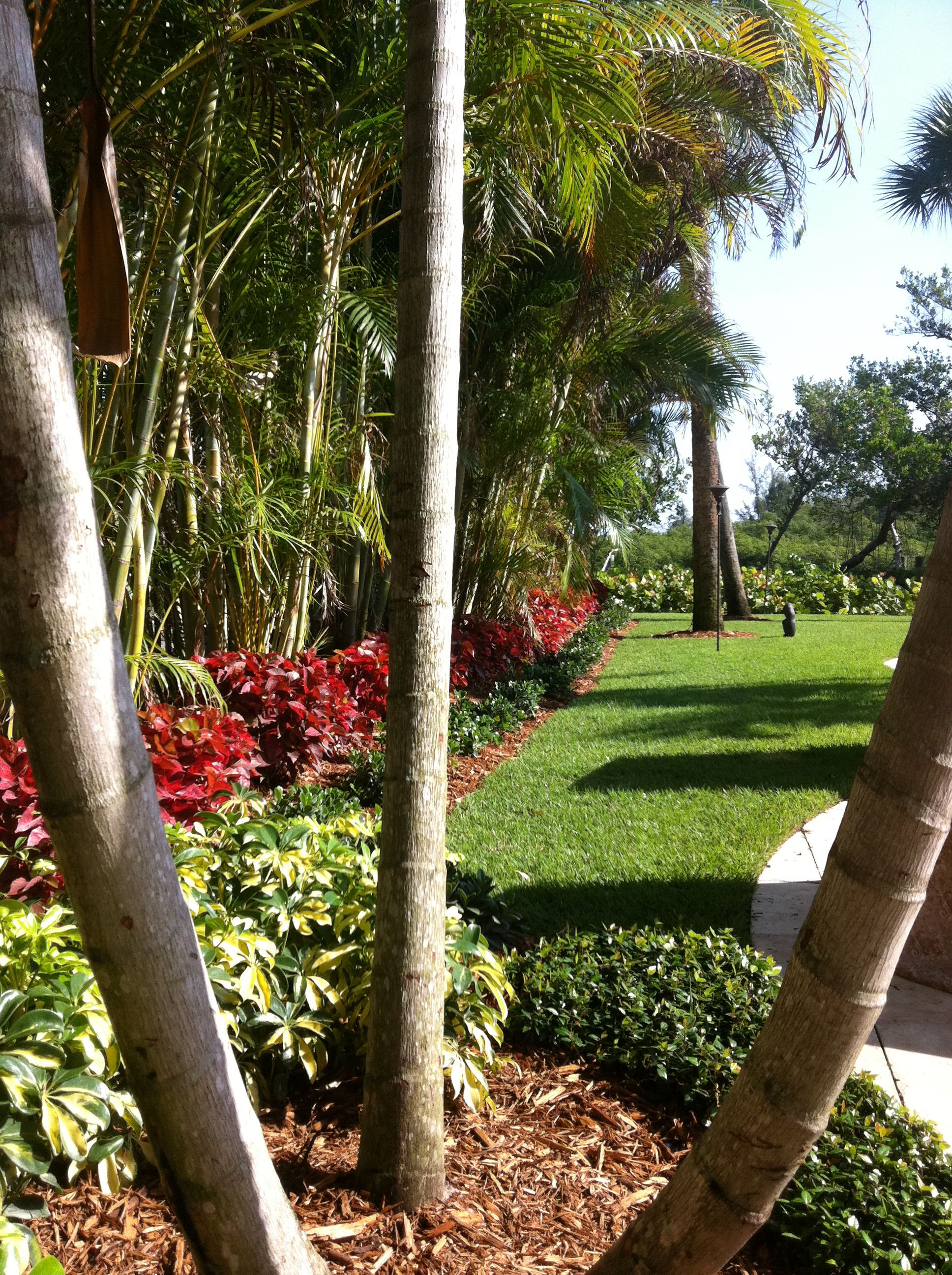 Tropical backyard Areca palm privacy | My Landscape ... on Backyard Landscaping Ideas With Palm Trees id=68493