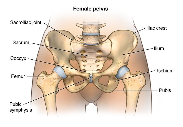 medical anatomy of a female bum - Google Search | Pre - Collection ...