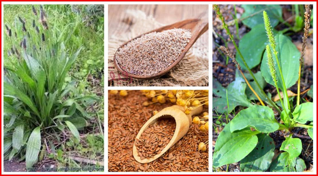 عشبة لسان الحمل فوائد وأضرار وطريقة استعمال بذور القاطونة في الاغراض المختلفة In 2021 Fruit Cantaloupe