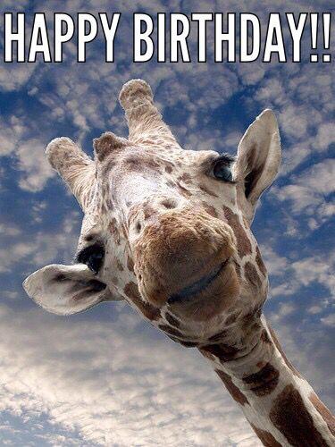 Giraffe Birthday With Images Giraffe Cute Animals Animals