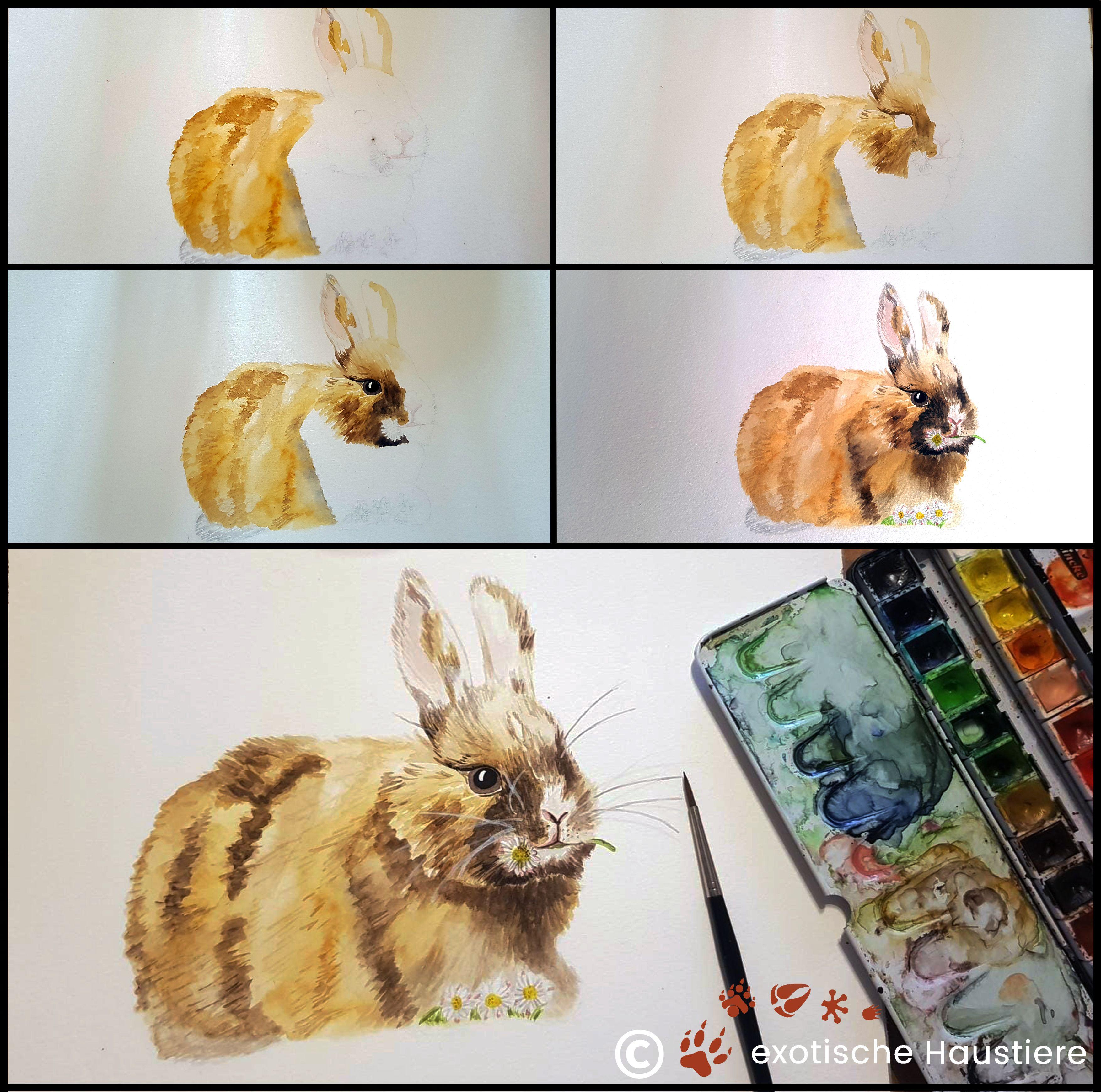 Entstehungszeichnung Kaninchen Aquarell exotische