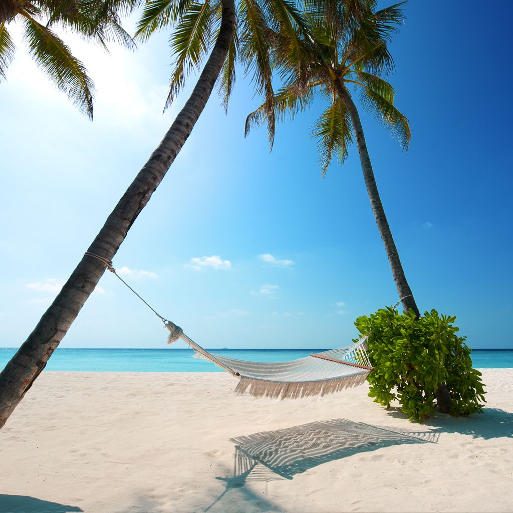 beach hammock in the sun iPad Wallpapers Beach scenes