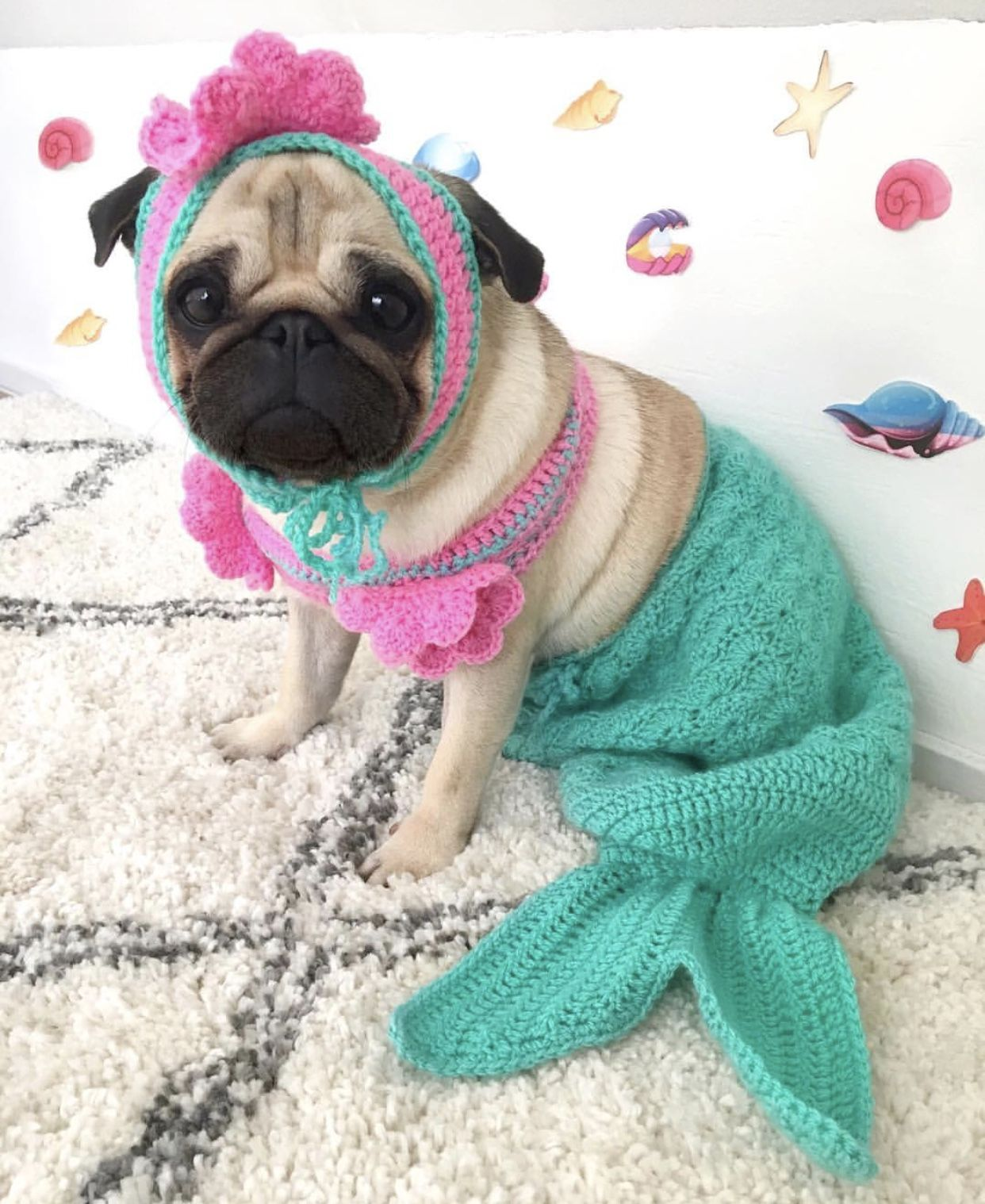 Mermaid Halloween Dog Costume Cute Pugs Pugs In Costume