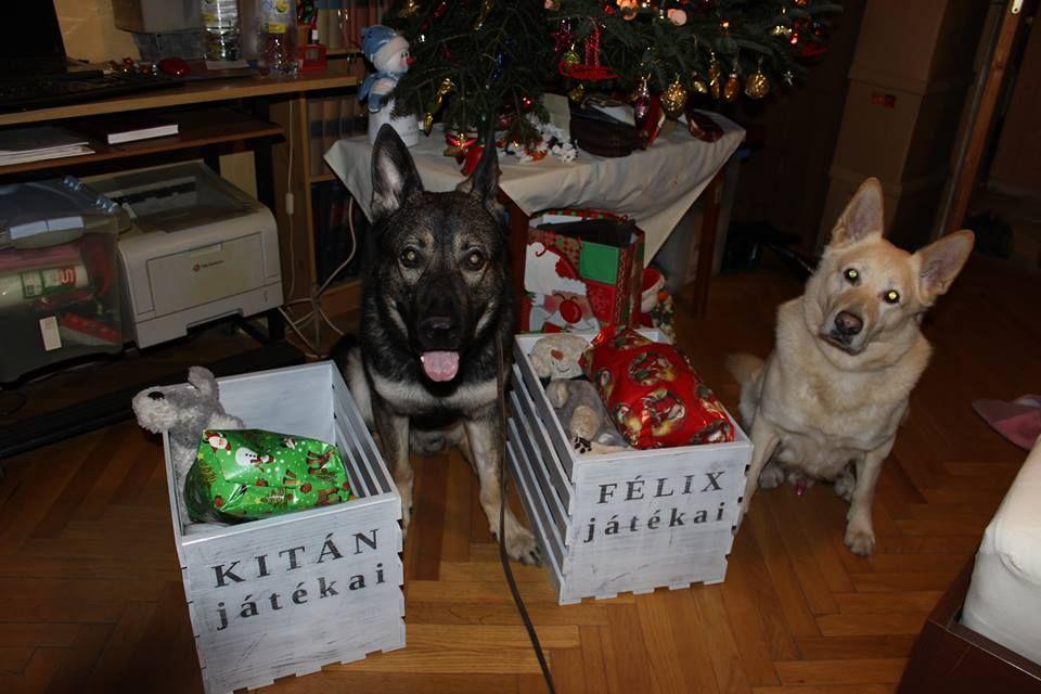 Félix és Kitán és a karácsonyi ajándékok.