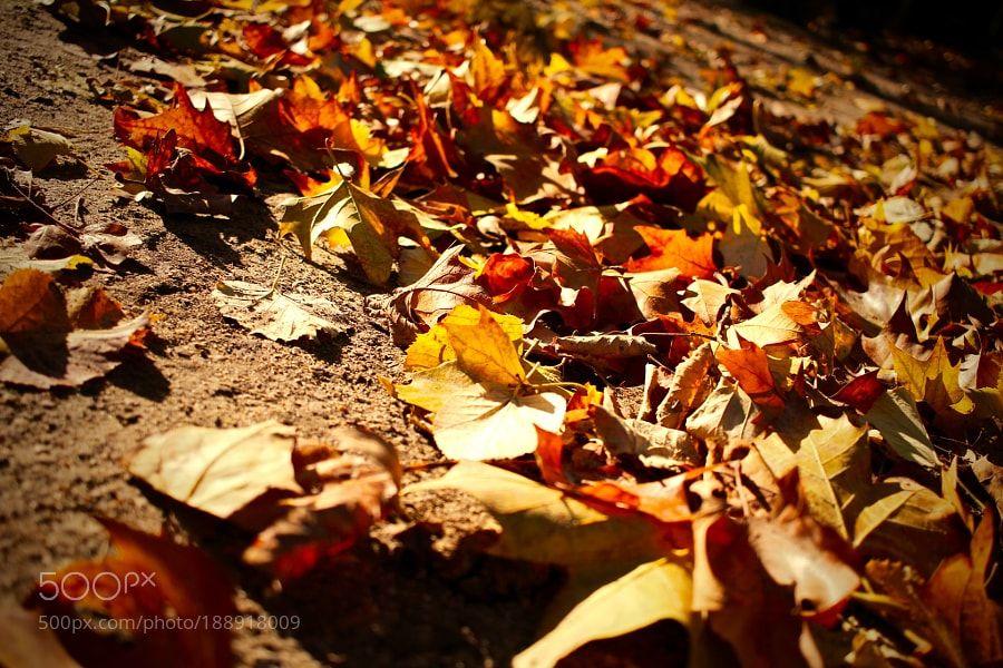 Feuilles d'automne au jardin du Luxembourg Paris by Point2vue410