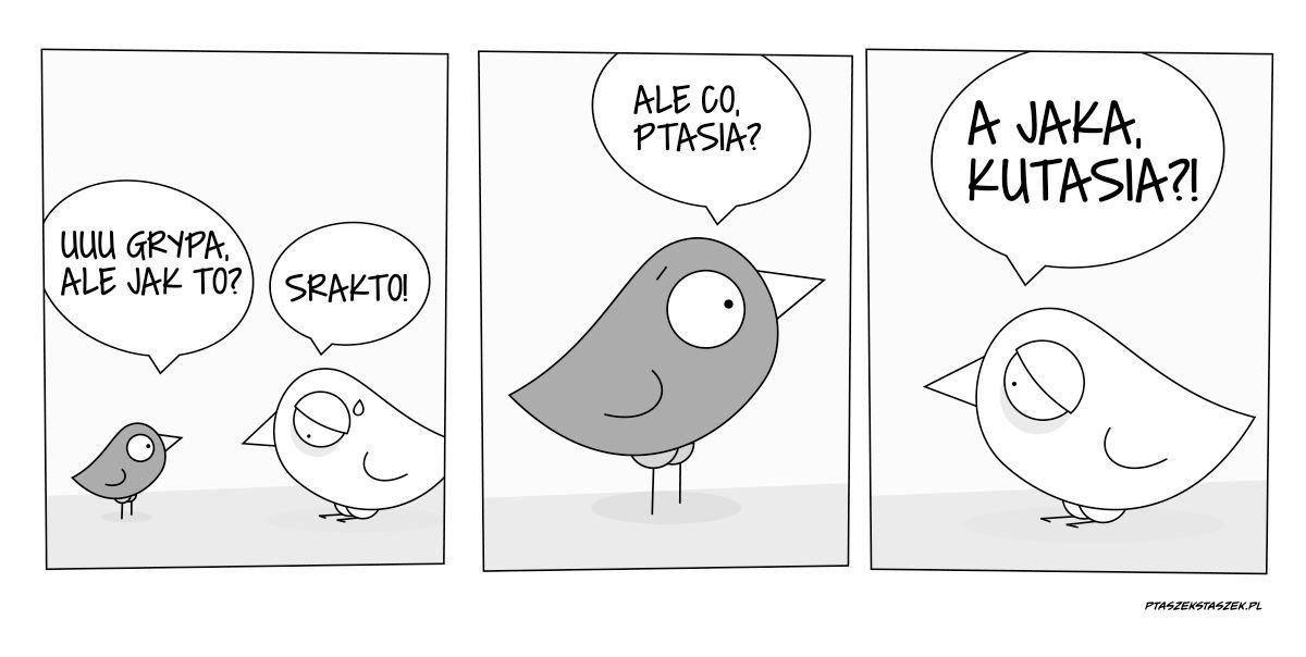 Grypa Ptasia Czy Kutasia Grypa
