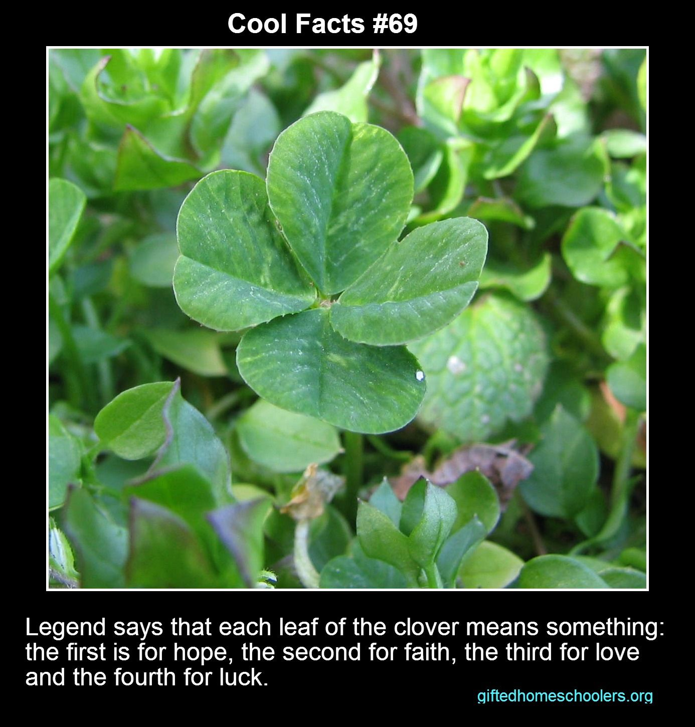 Cool facts 69 happy st patricks day almost