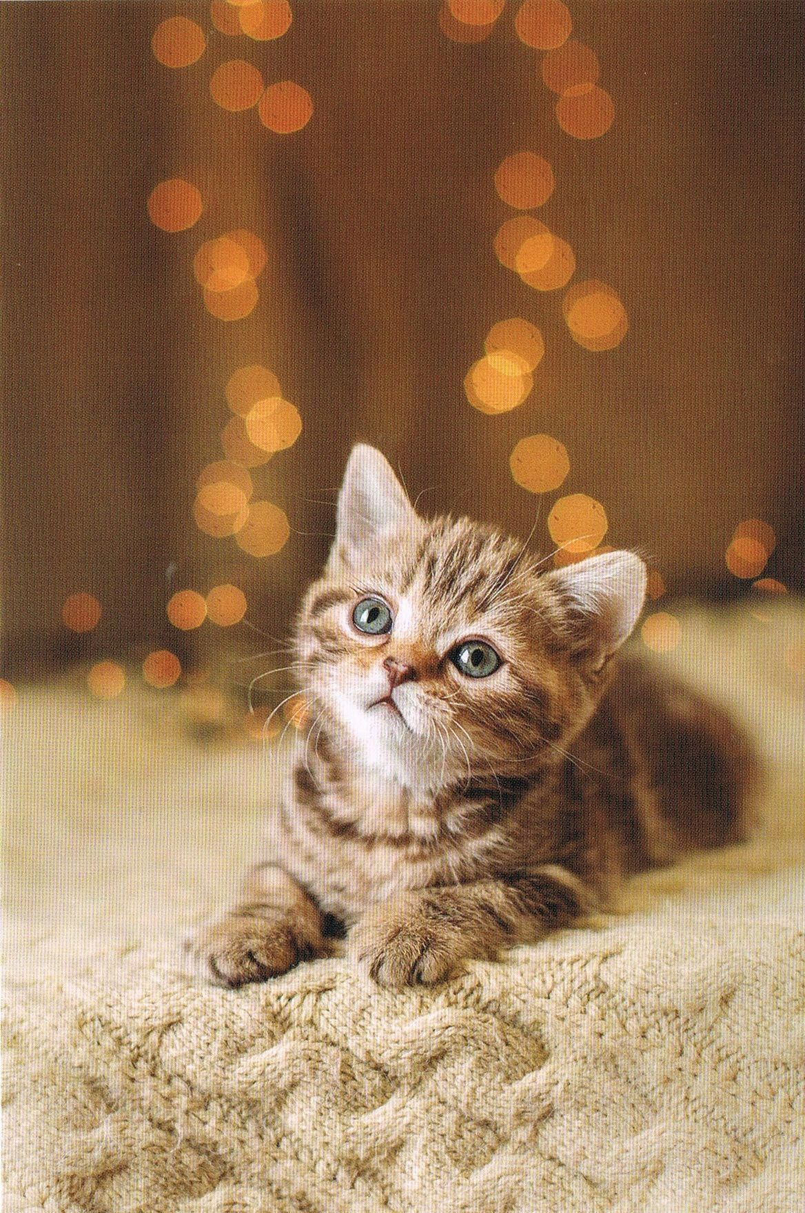 Cat Litter Box Size Cat Door Ideas Cat Furniture Diy Hidden Cat Litter Box Ideas Diy In 2020 Cute Cats And Dogs Kittens Cutest Pretty Cats