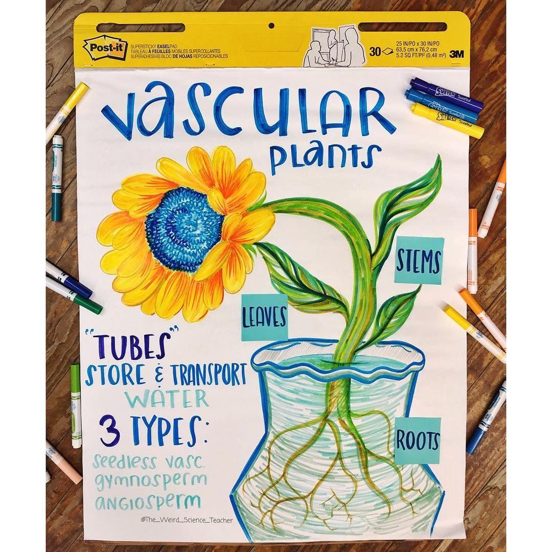 Rachael M Ed On Instagram We Vascular Plants Check
