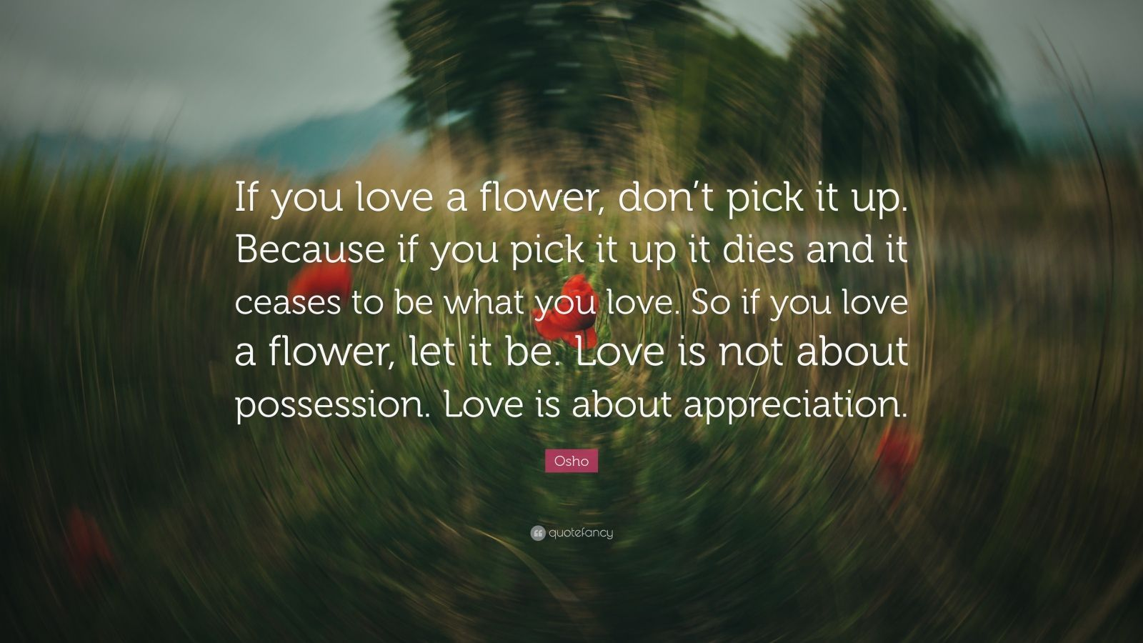 Osho Quote If You Love A Flower Dont Pick It Up Because If You Pick It Up It Dies And It Ceases To Be What You Love