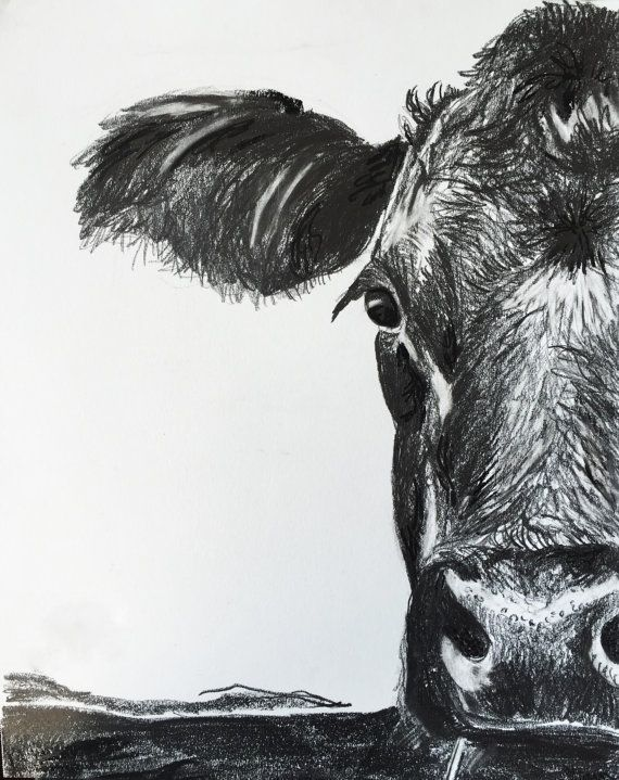 Charcoal Sketch Black Angus Art Cow Print Art Cow Artwork Cow Decor