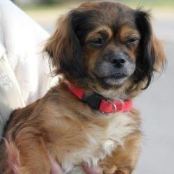 Adopt Daisy Mae On Unique Dog Breeds Rare Dog Breeds Popular