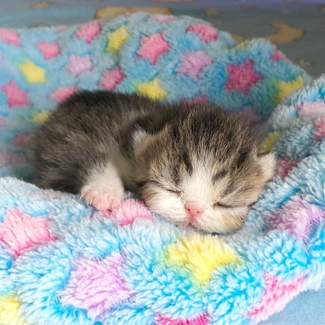 Cute Kittens Boy Names Cute Cats Hugging Kittens Cutest Baby Cats Cute Baby Animals