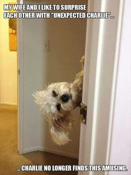 37 Of The Best Funny Animal Pictures Ever #funnyanimalpictures