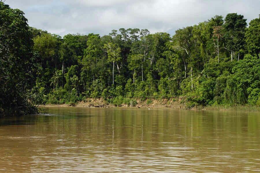 Bosques que se encuentran en colombia