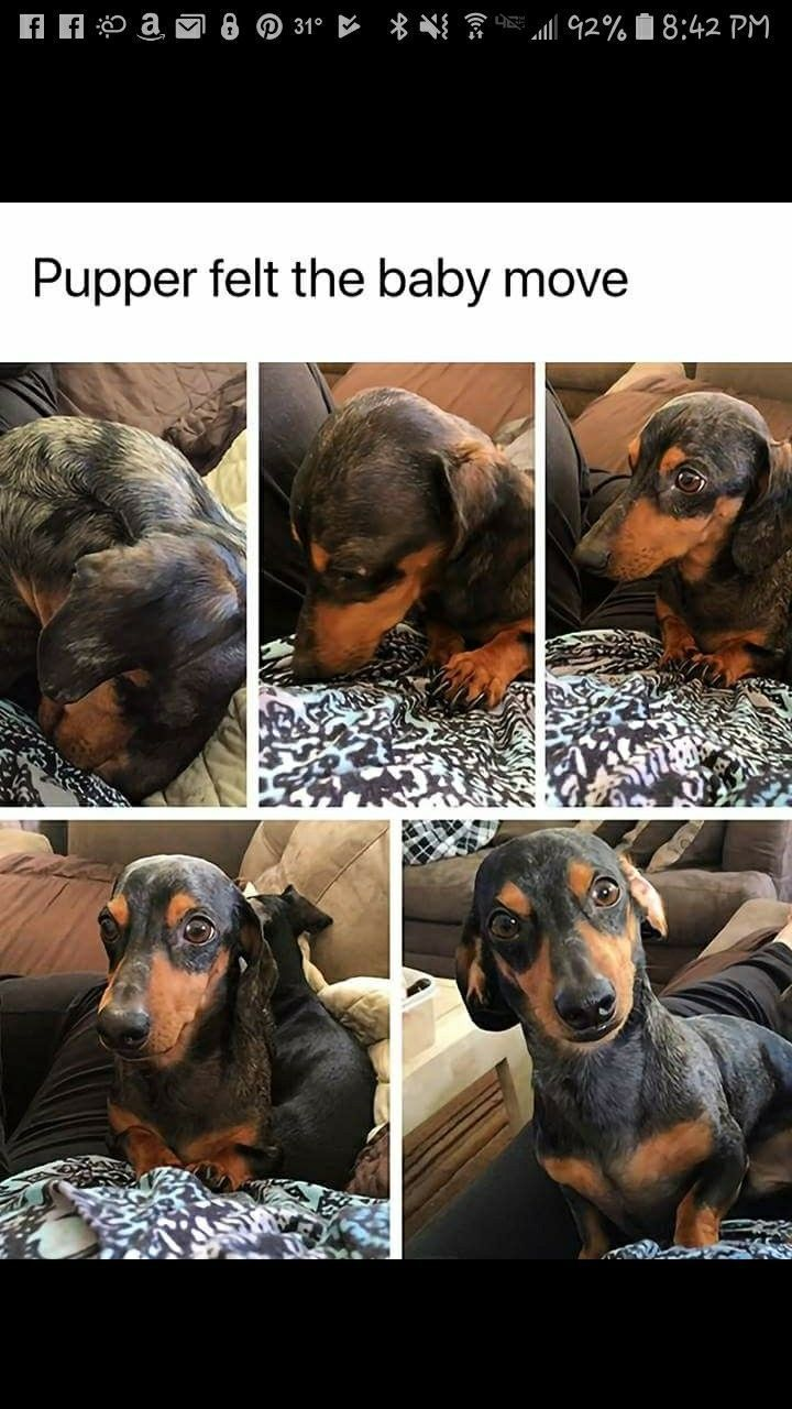 Long Haired Dachshund Pets Tips Notitle In 2020 Dachshund Breed Dachshund Pets Pet Hacks