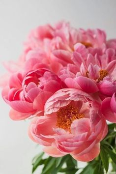 you can never have too many pink peonies