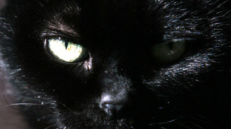 Petition Stop Scotland S Secret Cat Slaughter Change Org