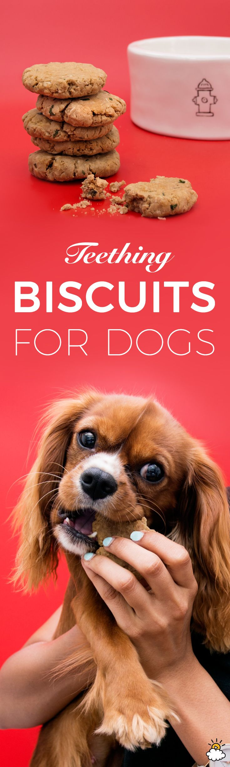 Teething Biscuits Recipe Puppy teething, Dogs, Puppy