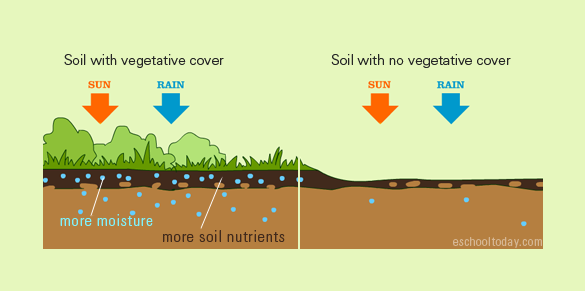 Soil Conservation For Kids Here Is How Vegetative Cover Can Help With Soil Conservation Soil Conservation Soil Conservation