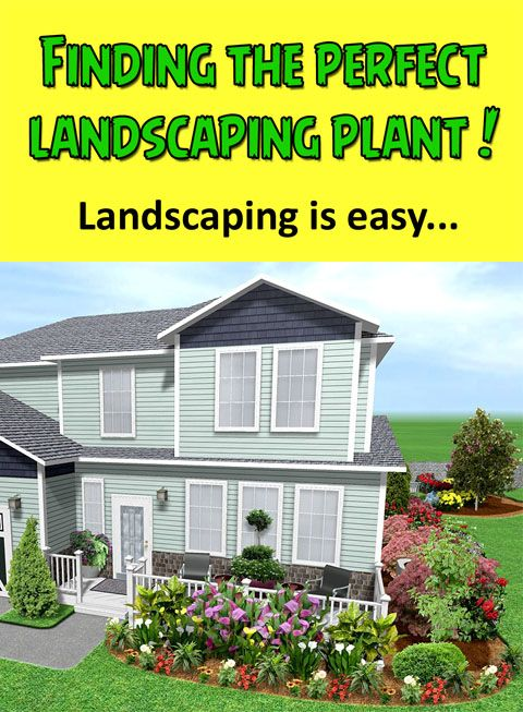 DIY Landscaping There are so many different plants for you to
