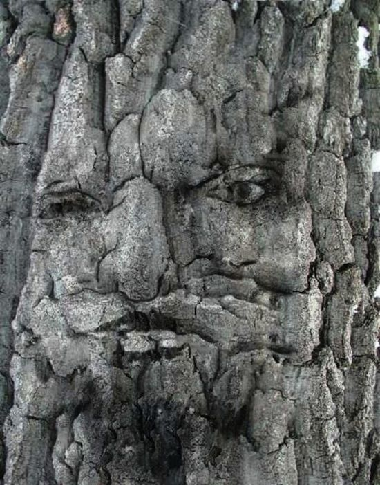 50 Things That Look Like Faces Weird Trees Unique Trees Tree