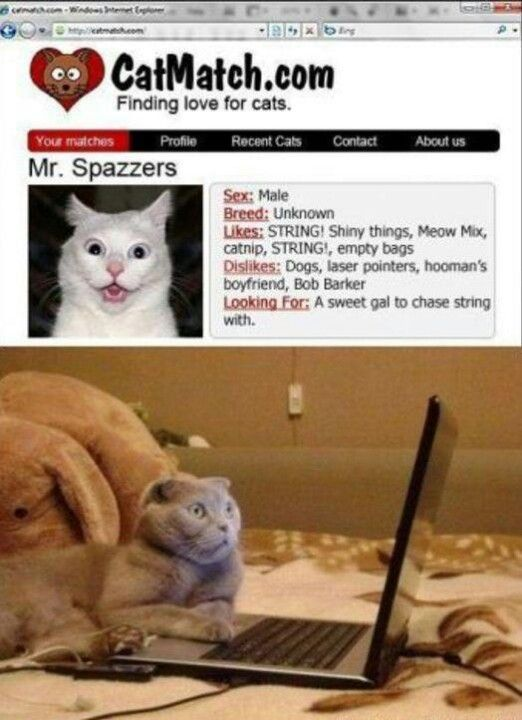 Cat lady dating site