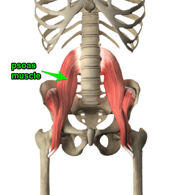 The Basics of the Psoas Muscle and Related Issues   Saude ...