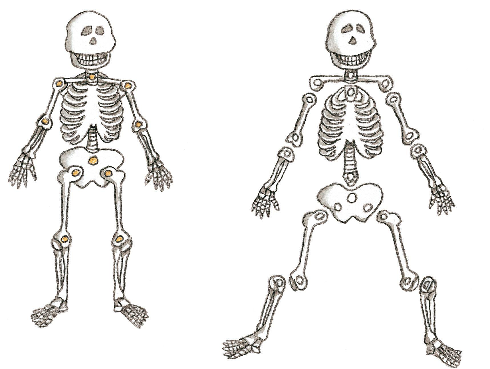Resultado de imagen para sistema oseo humano en figuras plana de ...
