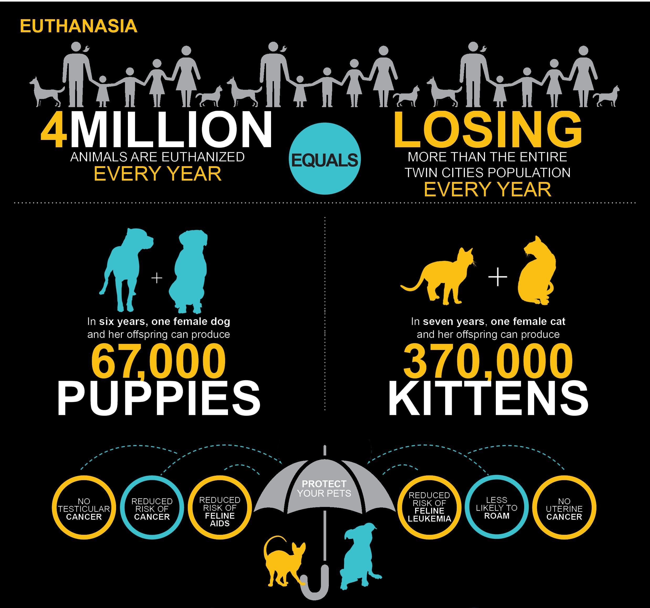 Find a lowcost Spay/Neuter program near you by selecting