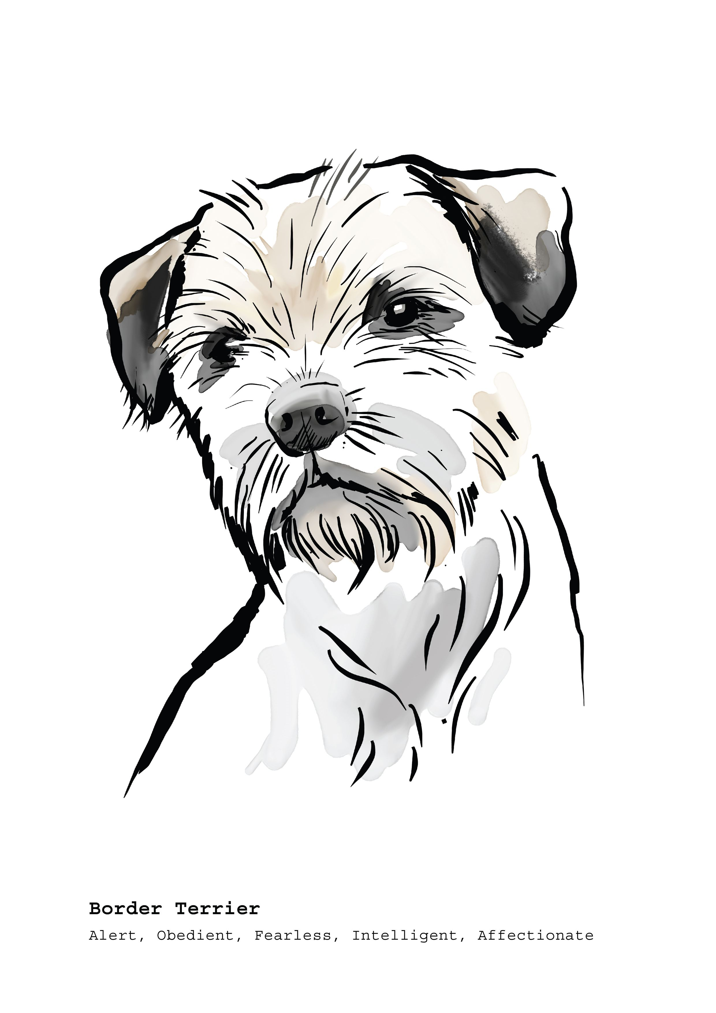- Border Terrier Dog Breed Art Print. Just One Of My Selection Of