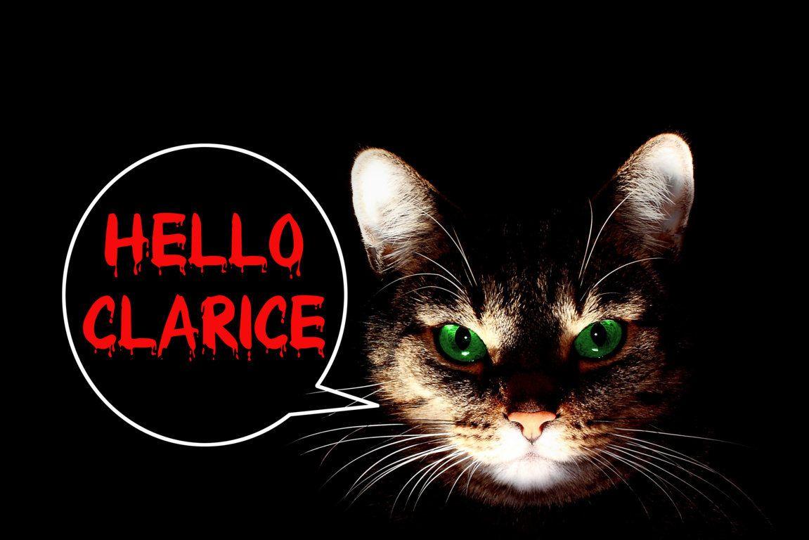 Hello Clarice Pinned By Www Computerfixx Biz Feral Kittens