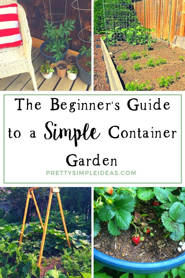 The Beginneru0027s Guide To A Simple Container Garden