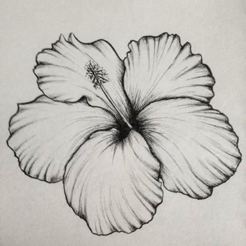 Flowers Drawing In 2020 Easy Flower Drawings Pencil Drawings Of Flowers Flower Drawing