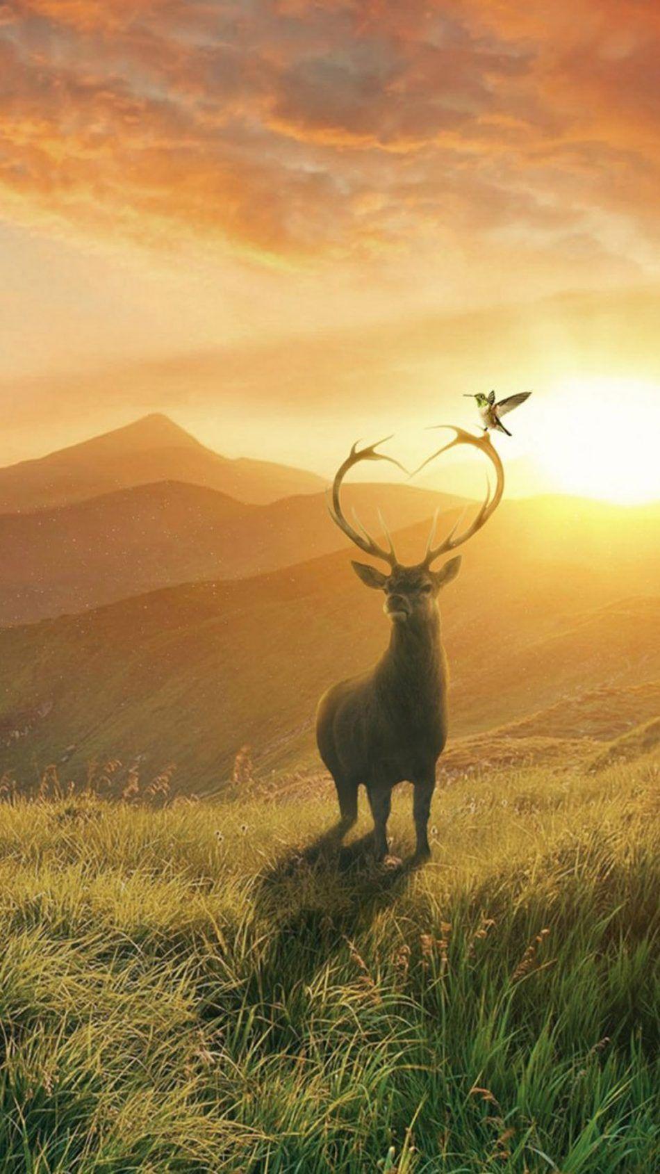 Deer Mountains Bird Landscape Sunset Deer wallpaper