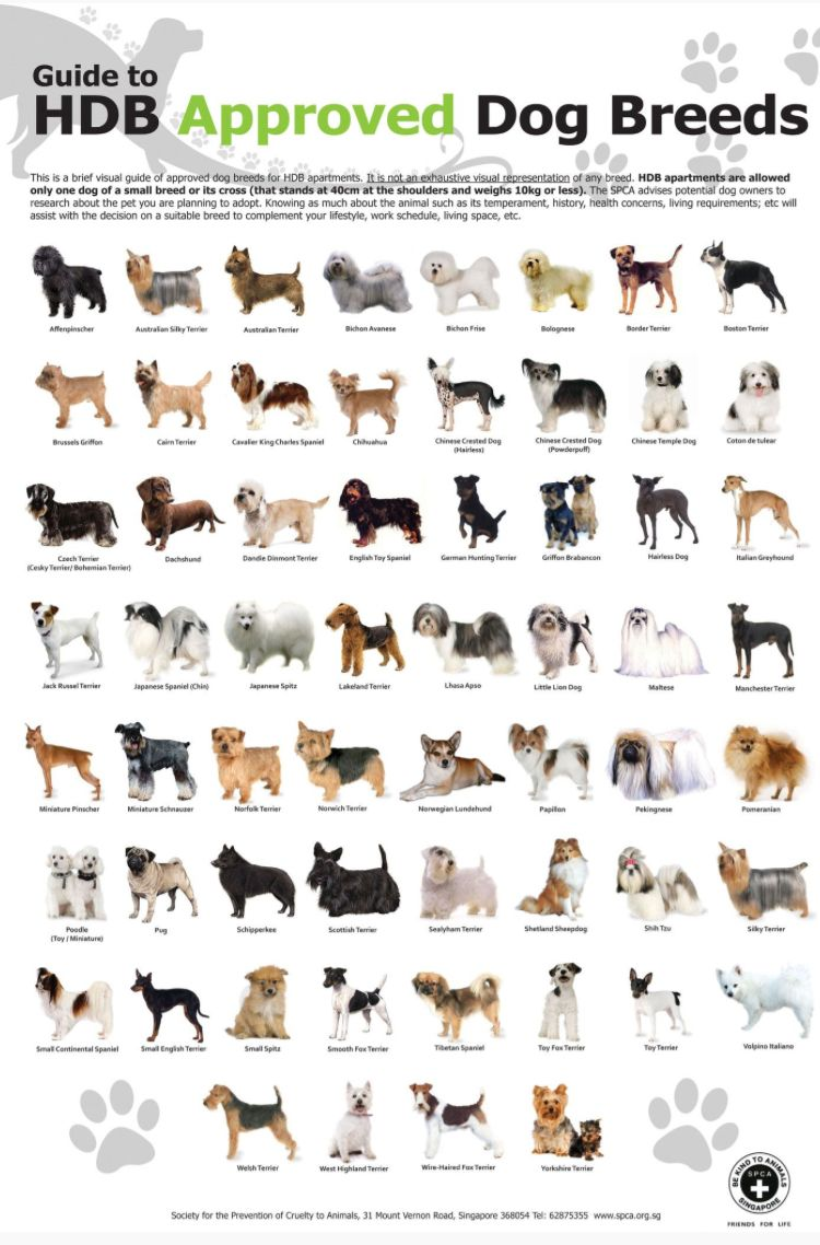 Pin By Justine Helleson On Dogs For Me With Images Dog Breeds