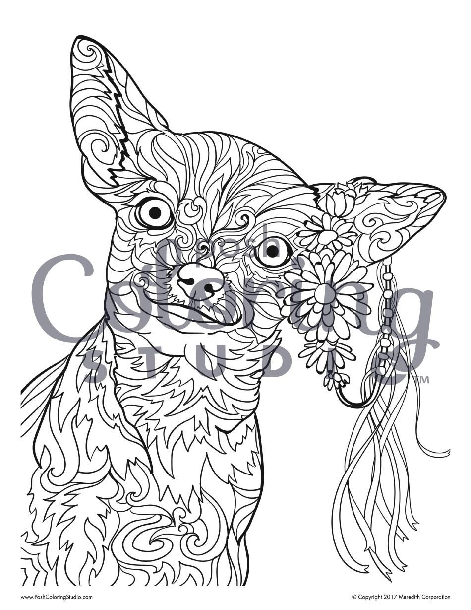 Chihuahua In A Flower Crown Coloring Page Posh Coloring Studio