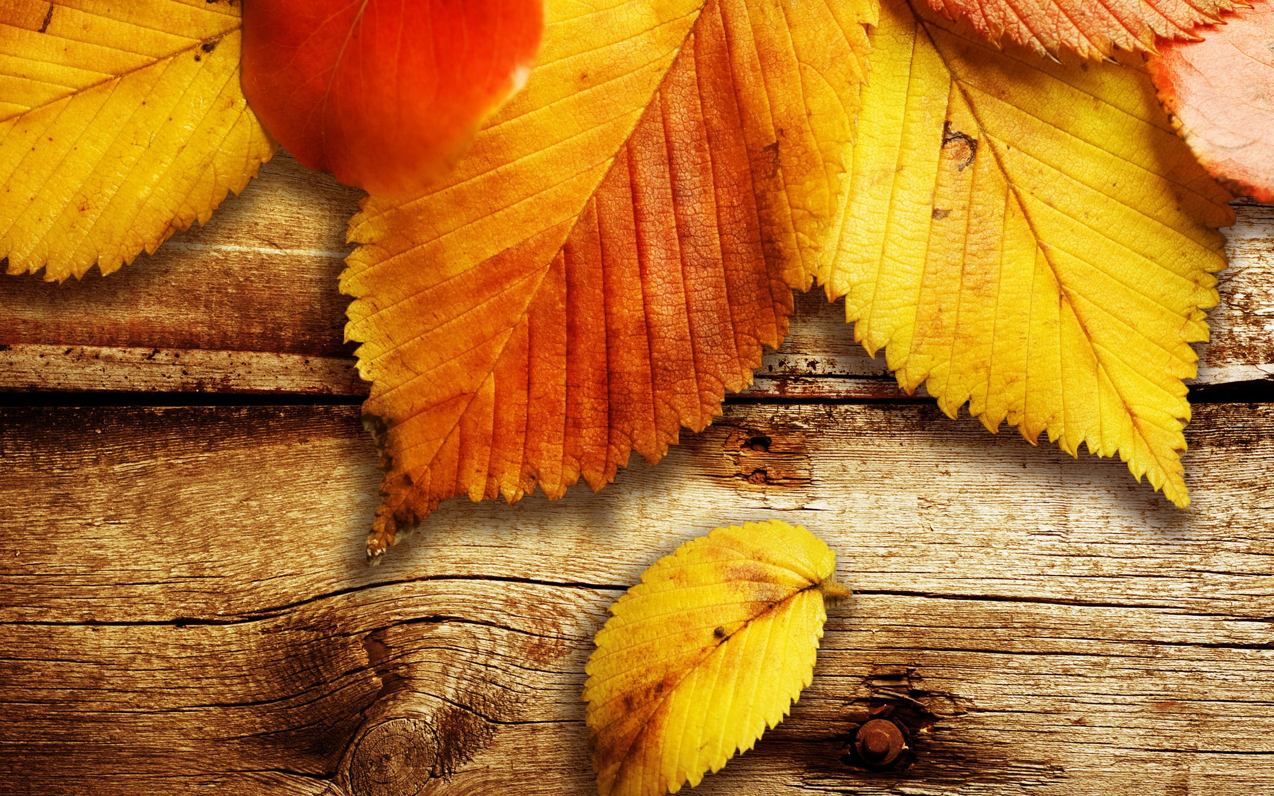Autumn Wallpapers Autumn Wallpaper Download The Free Wooden ...