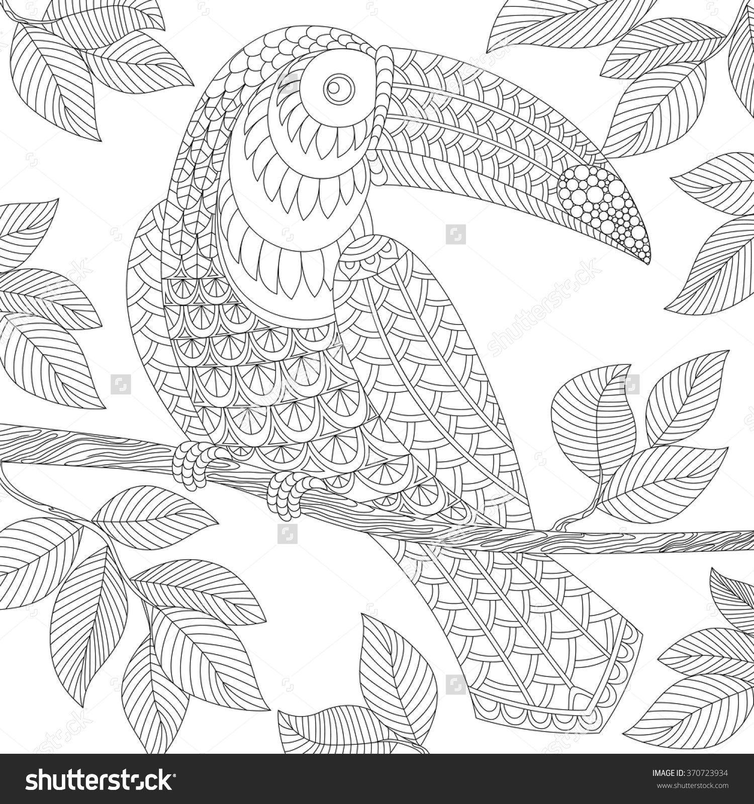 Toucan Adult Antistress Coloring Page Black And White Hand Drawn