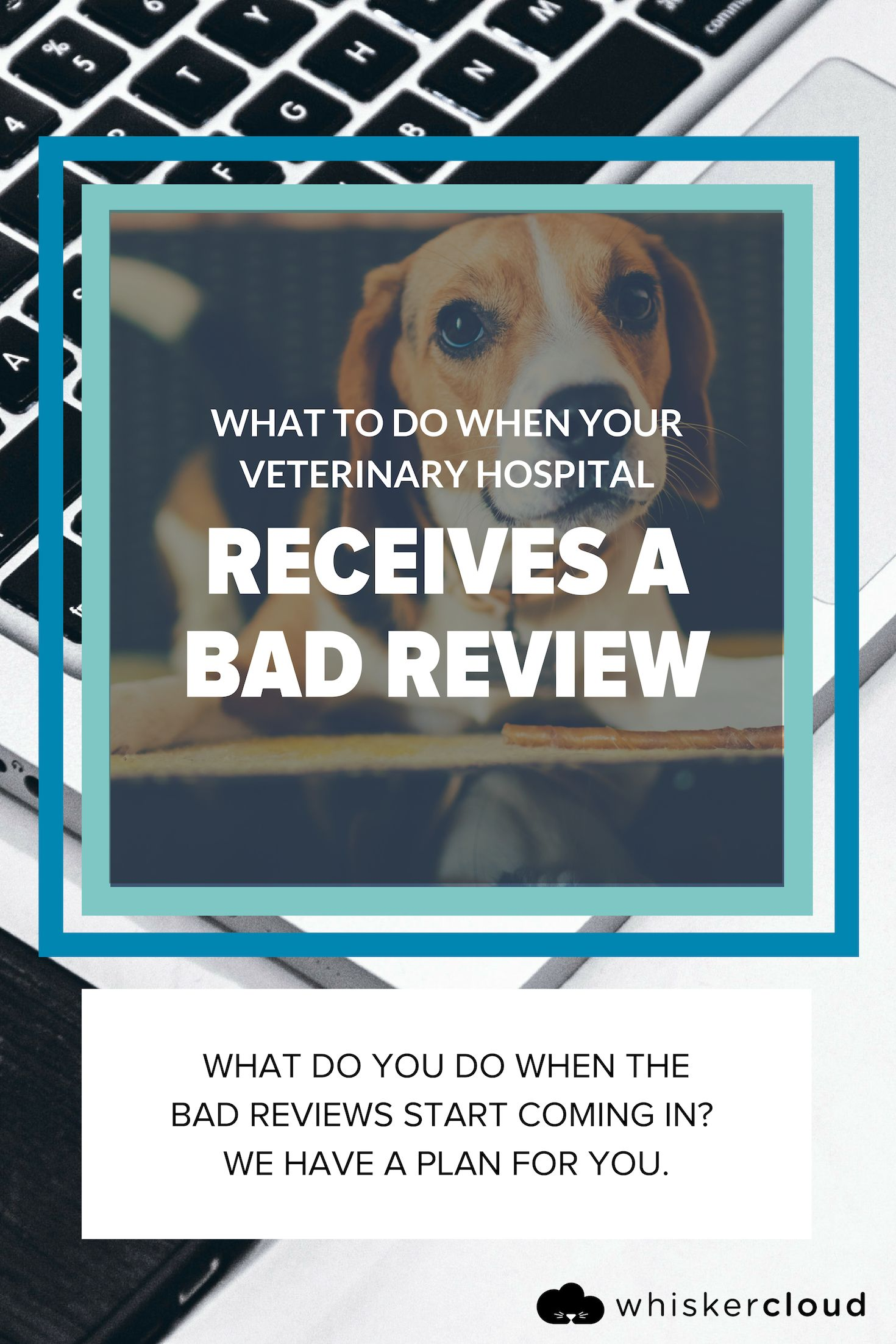 What To Do When Your Veterinary Hospital Gets A Bad Review