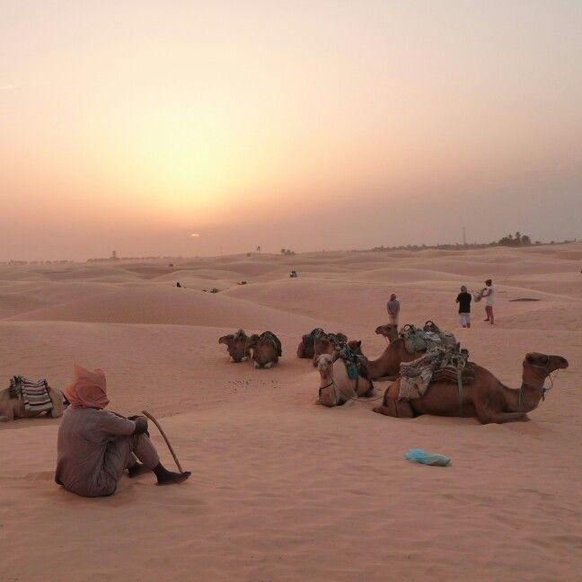 Sun rosé in the sahara
