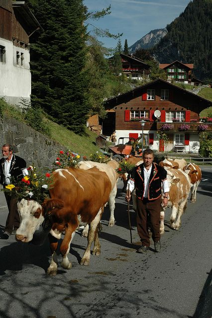 Lauterbrunnen Day 4 003 Lauterbrunnen Switzerland Alps Swiss Switzerland