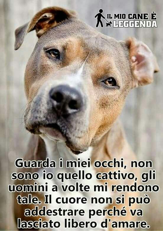 Frasi Sui Cani Pitbull.Tanta Verita In Una Sola Frase Eliminiamo I Pregiudizi Citazioni Sui Cani Amici Per Sempre Animali