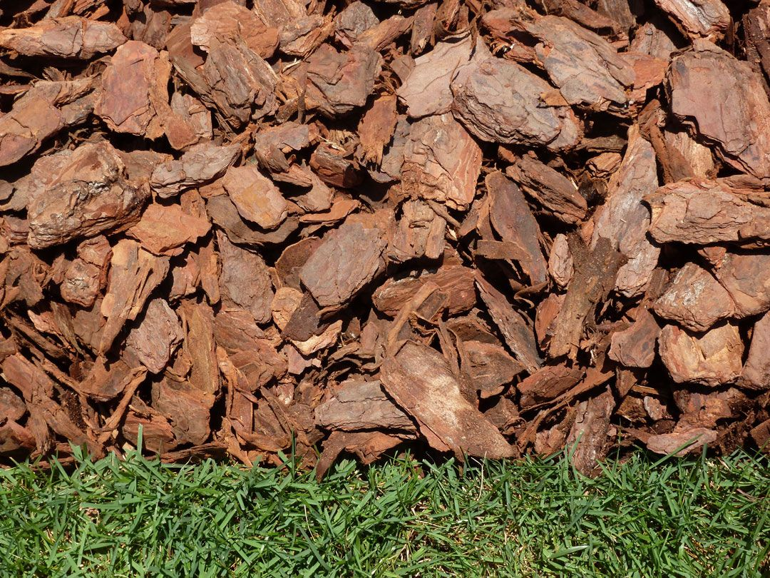 Traditional Pine Bark Is Available These Days As Mini Pine