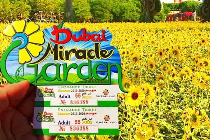 Season 8 Dubai Miracle Garden (With images) Miracle garden