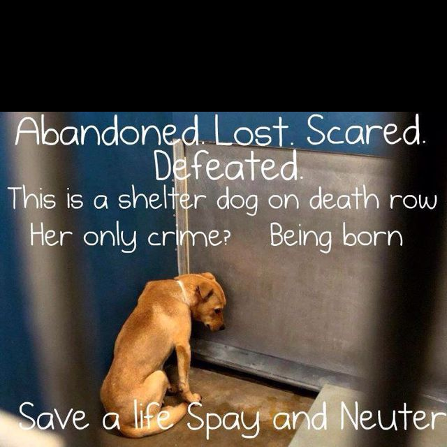 Dogs on death row....their only crime is being born.  Save a life.