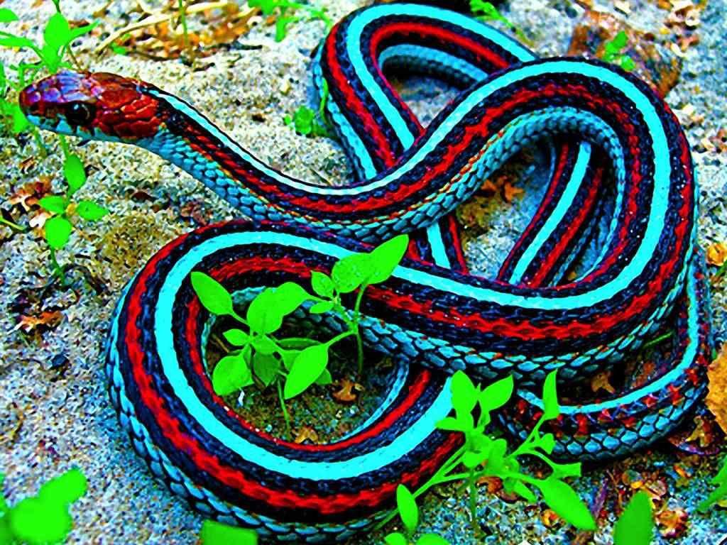 Top Seres Coloridos Com Imagens Arte Da Natureza Cobras