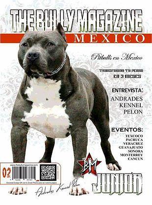 The Bully Magazine Perros Eventos Veracruz