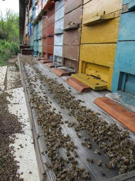 GET IT? YES, those are piles of dead honeybees! ENOUGH ALREADY, STOP KILLING OUR POLLINATORS!